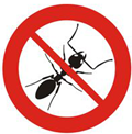 Pest Control in Hertfordshire